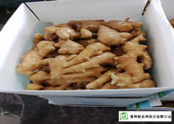 China Own Bases Organic Fresh Ginger Storage Temperature 10 °C - 15 °C factory