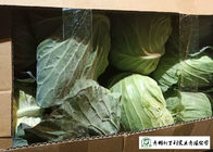 China Wholesaler All Season Cabbage Green Color Rich In Vitamin C Easy Stockpile company