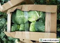 China Natural Hue All Season Cabbage 2.5 Kg / Per Helps Improve Digestion company