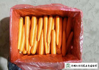 China Quality A Little Finger Carrots S / M / L / 2L Size Supply To Supermarket factory