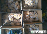 China Small Size Fresh Potato 100 G - 200 G Supply To Wholesaler And Supermarket factory