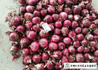 Juicy Sweet Red Onion 10 Kg / Bag Packing White Flesh For Cooking
