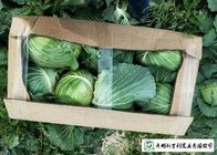 China Clean Healthy Raw Green Cabbage , Small Round Cabbage No Pollution company