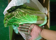 China Healthy Organic Chinese Cabbage Japan Standard Big Size Own Bases company