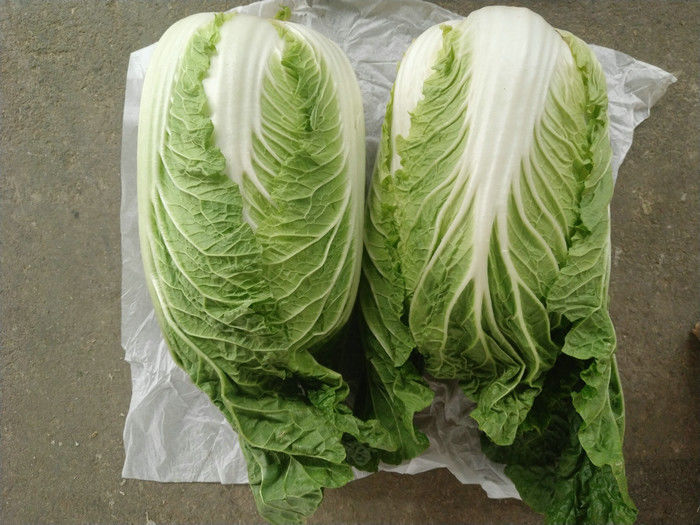 Improve Digestion Mini Drumhead Cabbage , Late Flat Dutch Cabbage 1-3KG/PER