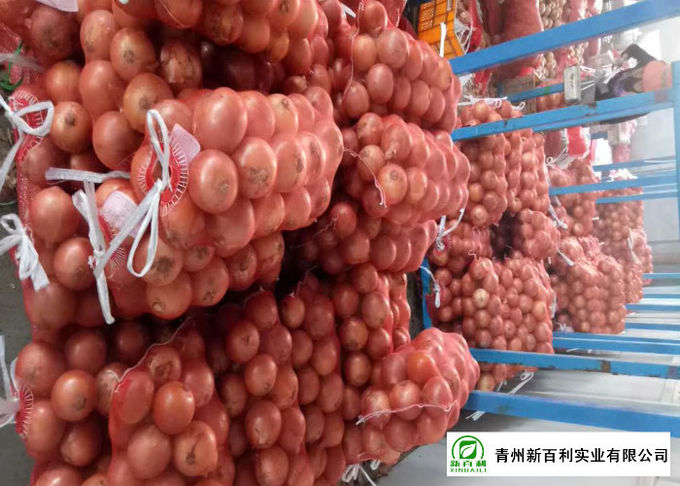 Natural Fresh Onions , Fresh White Onion Suitable Dry Storage Environment
