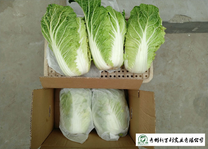 Japan Standard Fresh Chinese Cabbage No Pesticide Residue Apply To Supermarket